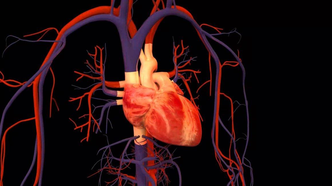 kalp krizi belirtileri1