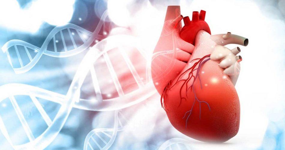 Kolesterol Nasıl Düşürülür