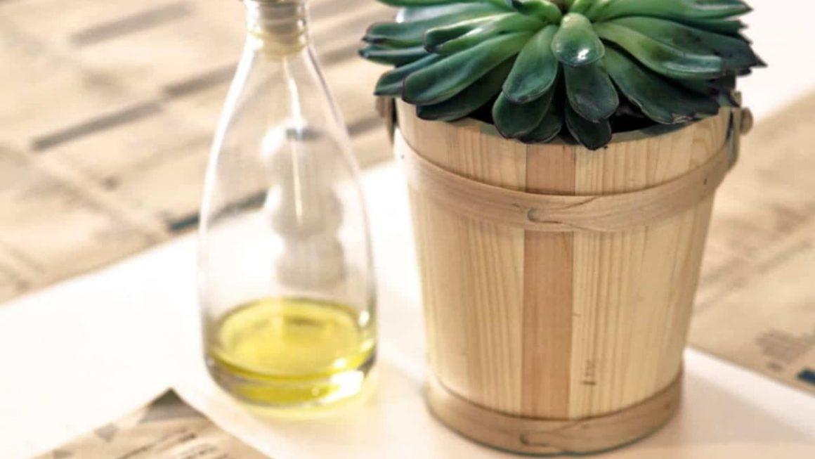 çay ağacı yağı faydaları