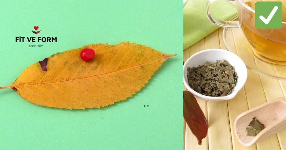 ceviz yapraginin faydalari